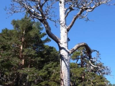 Rio Moros - ruta de senderismo desde Madrid; cerezos en flor valle del jerte